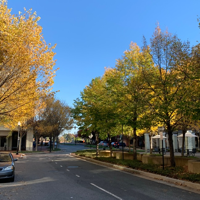 Fall colors in Alexandria, Virginia.